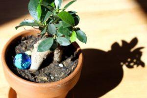 盆栽,肥料