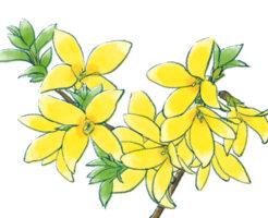 レンギョウ,盆栽,育て方,作り方