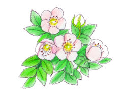 野ばら,盆栽,作り方,育て方