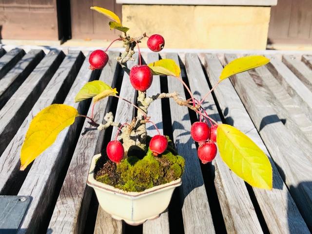 ヒメリンゴ盆栽の育て方・作り方